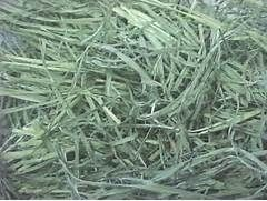 White House Farms: Memorial Day Fescue Free Horse Hay!