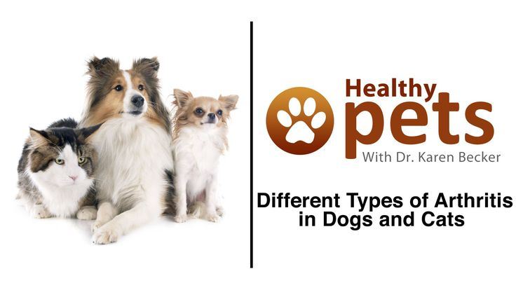 Dr. Becker Discusses the Different Types of Arthritis in Pets - WATCH VIDEO HERE -> http://arthritisremedy.info/dr-becker-discusses-the-different-types-of-arthritis-in-pets/     *** how do you get arthritis ***   Dr. Karen Becker, a proactive and integrative wellness veterinarian, talks about the different types of arthritis in pets — osteoarthritis or degenerative joint disease, septic arthritis, and immune-mediated polyarthritis. Video credits to the YouTube...
