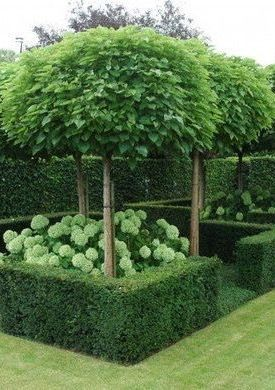 If we can't have hydrangeas, would love something similar. Also really like the tree either for front and or back garden.