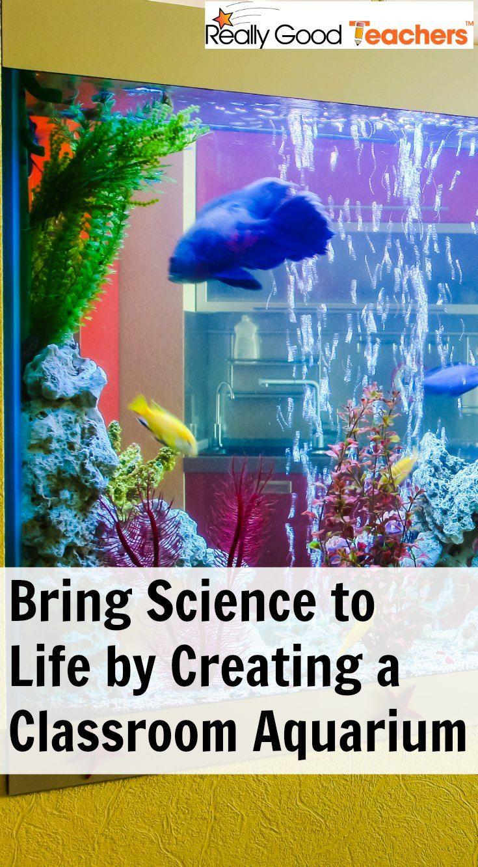Classroom Aquarium Ideas : Best images about science ideas on pinterest