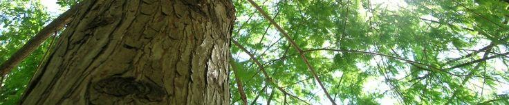 business_growth_tree_kromamarketing