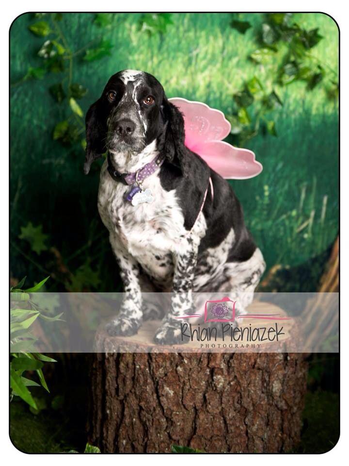 Fairy Mini Session. Pets. Rhian Pieniazek Photography.