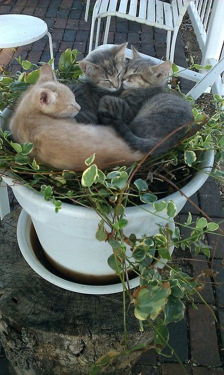 Cats making trouble for the gardener while enjoying a nap.
