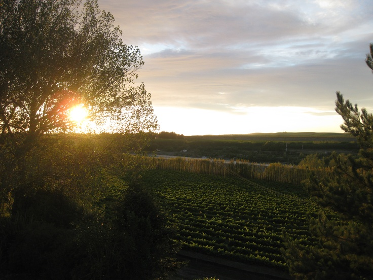 Sunrise over the winery Vavasour Awatere  Valley, Marlborough, NZ