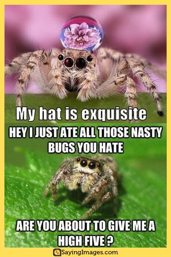 25 Misunderstood Spider Memes For Arachnid Lovers With Images