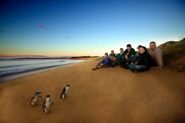 The Ultimate Penguin Tour (Phillip Island Nature Parks) www.penguins.org.au