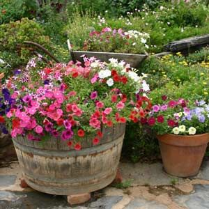 Homemade containers and recycled containers are just fine if they fit your design theme.: Flowers Gardens, Gardens Ideas, Spring Flowers, Green Thumb, Container Gardens, Whiskey Barrels, Front Yard, Gardens Container, Gardens Tips