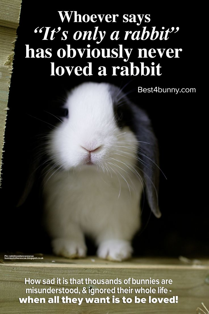 Whoever says 'It's just a rabbit' has never loved a rabbit!