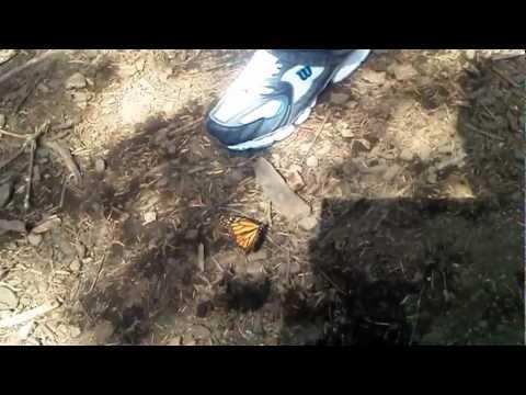 Mariposa Monarca Que experiencia !! viajaBonito.mx