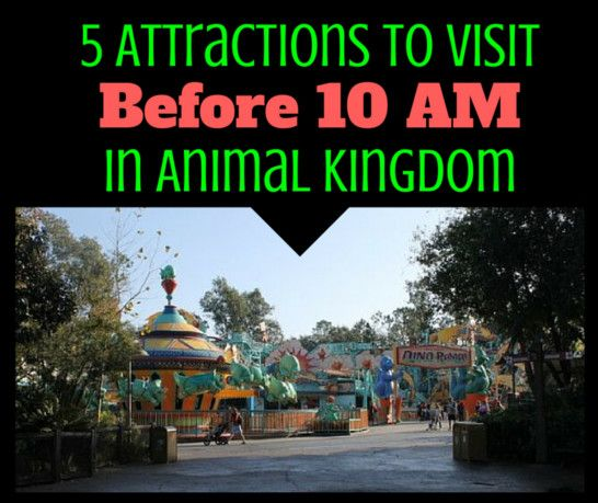 To make the most of your day, here are 5 attractions to visit before 10 am in Animal Kingdom.