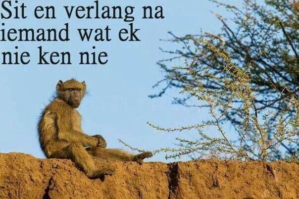 Afrikaans Ek het net so lekker gelag Hy lyk skoon depressief