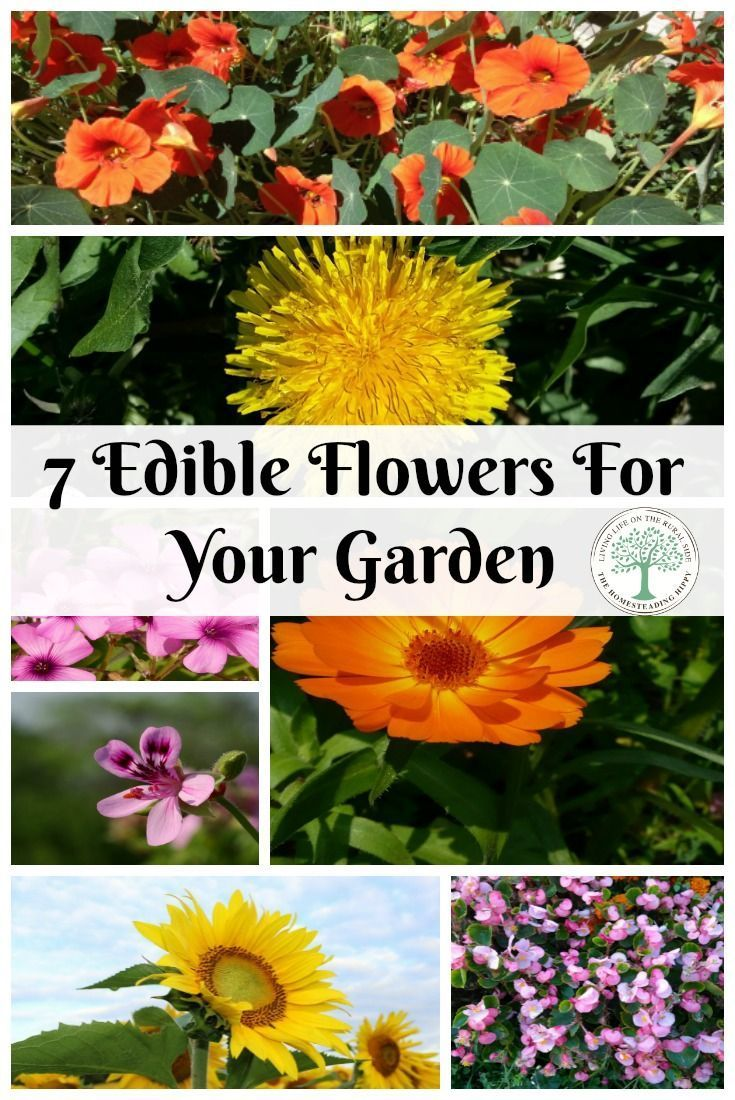 Besides being great food for bees, edible flowers are the perfect way to add beauty to any meal.  The Homesteading Hippy via @homesteadhippy