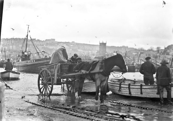 Collecting fish by horse and cart in St Ives - 1920