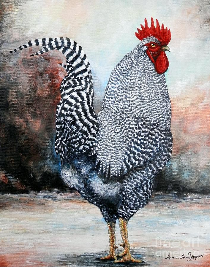 Paintings of Chickens and Roosters | Rock Rooster Painting by Amanda Stewart - Barred Rock Rooster Fine Art ...