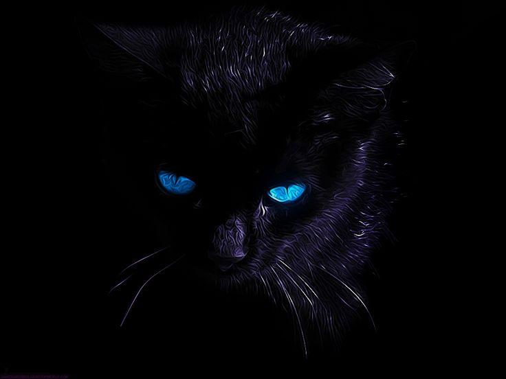 картинки с черными кошками с голубыми пожалуй один наиболее