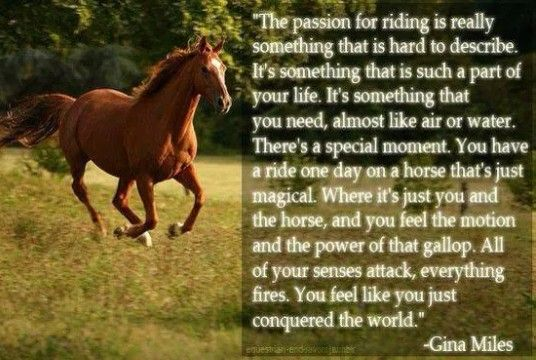 The passion for riding is really something that is hard to describe. It's something that is such a part of your life. It's something that you need, almost like air of water. There's a special moment. You hve a ride one day on a horse that's just magical. Where it's just you and the horse, and you feel the motion and power of that gallop. All of your sences attack, everything fires. You feel like you just conquered the world.