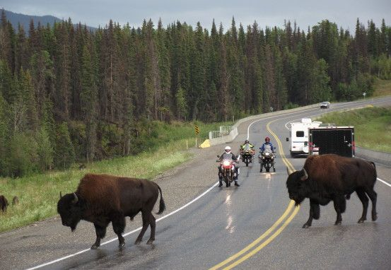 The Alaska Highway by Motorcycle #exploreBC #roadtrip #roadtripBC