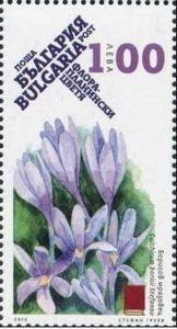 Colchicum borisii stefanov