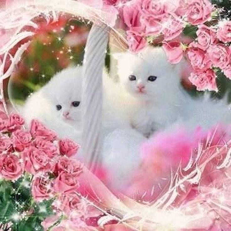 Pin de Cindy Udhardt em Cats Animais bebês mais fofos