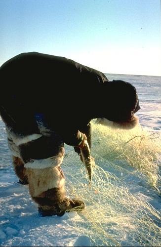 Ice fishing near Gjoa Haven (Uqsuqtuuq), Nunavut Photo credit: Government of the Northwest Territories (GNWT)