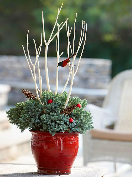 Keep It Simple - just one Blue Star juniper and a few decorations