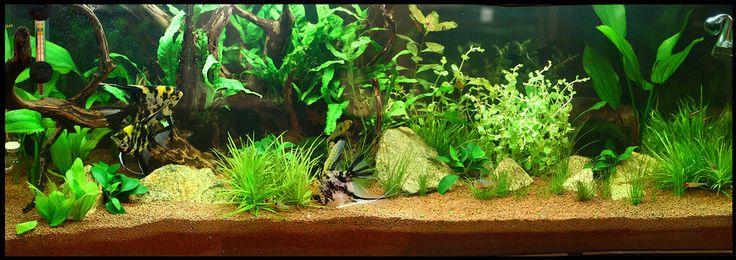 120 L. Aquarium