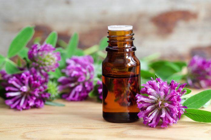 Červený jetel: Spása nejen při menopauze