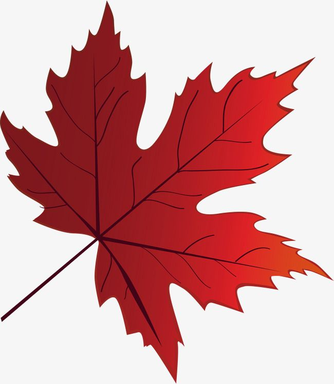 Fire Red Maple Leaf Elements Maple Leaf Red Fire Fire Vector