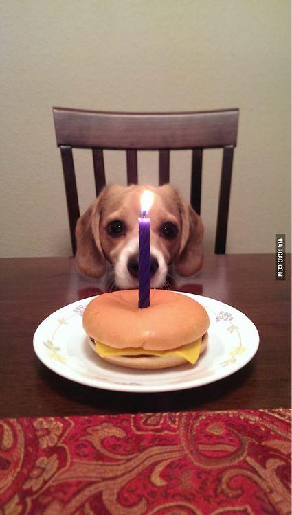 1000 Ideas About Happy Birthday Puppy On Pinterest