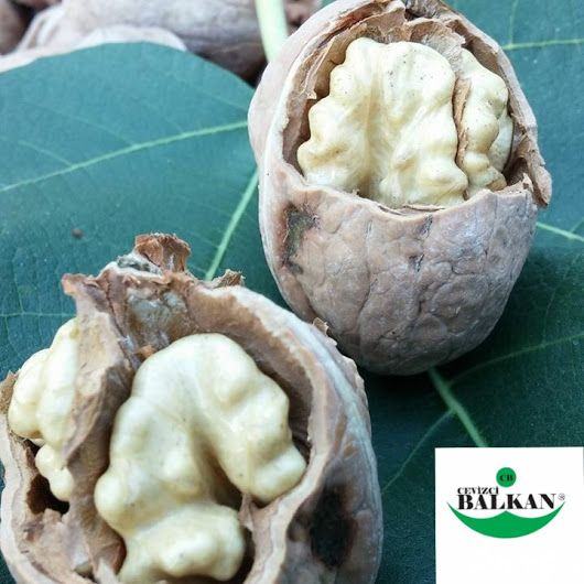 balkanceviz.com #tarım <https://plus.google.com/s/%23tar%C4%B1m> #üretim  <ht...