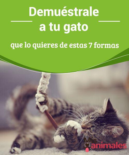 Demuéstrale a tu #gato que lo quieres de estas 7 formas  Los gatos son #conocidos por ser misteriosos, y por ello muchas #personas dicen que no logran entenderlos. A los que nos encantan los #felinos sabemos que no es así, y que hay muchas formas de entender sus #sentimientos y de mostrarles los nuestros.