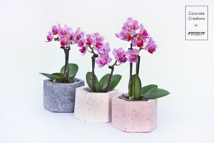 These mini orchids look stunning in our concrete pots! Concrete creations by greenery  #greenery #orchids #plants #concrete #geometric #concretedesign #chania #greece