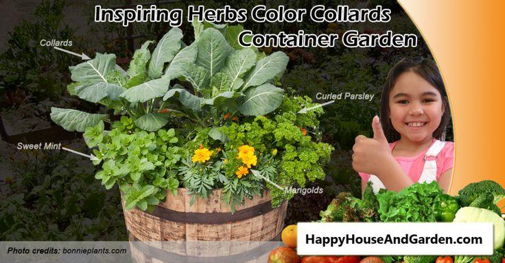 Inspiring Herbs Color Collards Container Garden