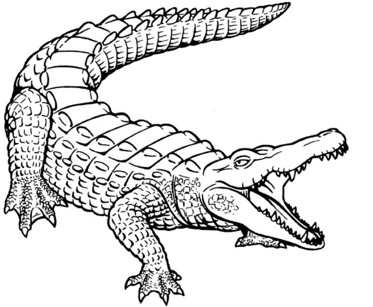 alligator outline Colouring Pages