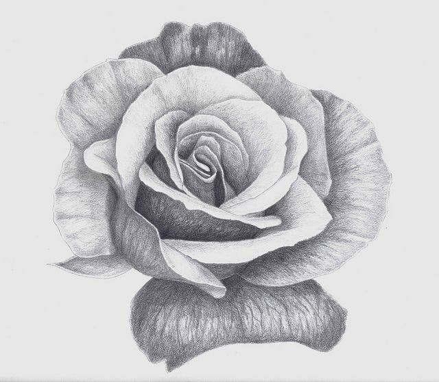 Rose Flower Drawing In Pencil Incomplete Projects To Try Pinterest