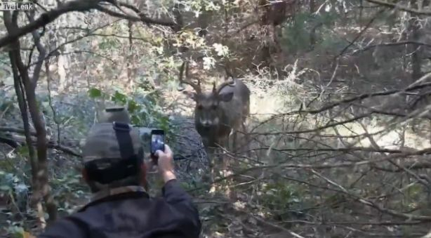 Sexy deer hunting pic consider