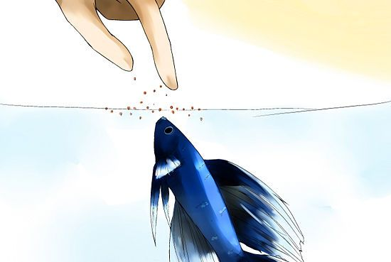 How to Take Care of a Betta Fish: 8 steps (with pictures)