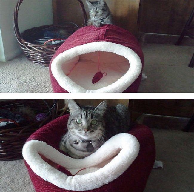 Сложные отношения котов с подарками