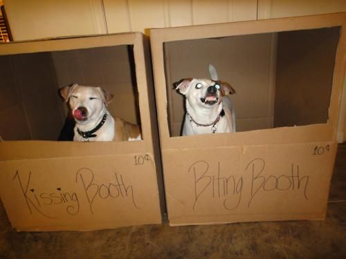 Which one ..Puppies, Funny Pics, Funny Dogs, Jack Russell Terriers, Kisses Booths, Dogs Funny, Bites Booths, The One, Animal
