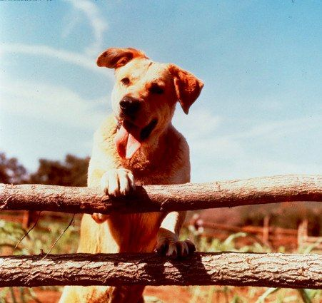 Old Yeller. Omg why am I pinning this now I'm going to CRY!!