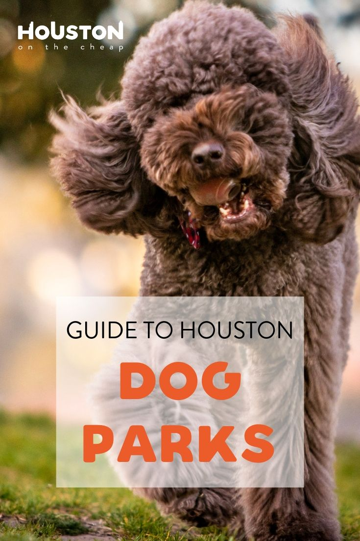 The Best Dog Parks In Houston A Complete Guide Dog Park Dogs Houston