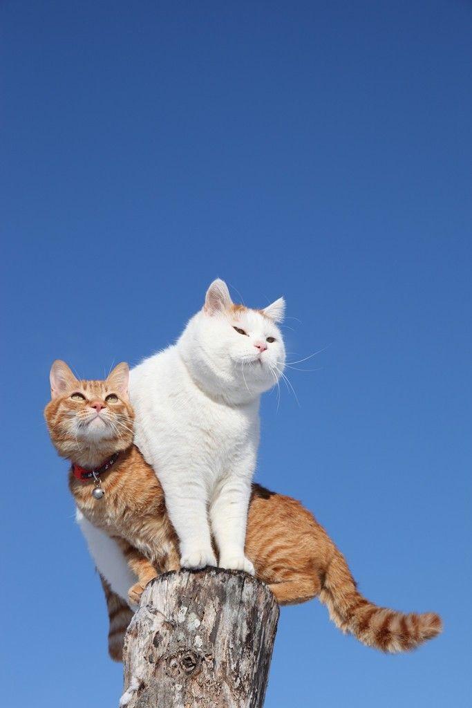 When cat sentries collide