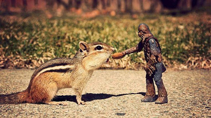 squirrels, chipmunks - desktop wallpaper