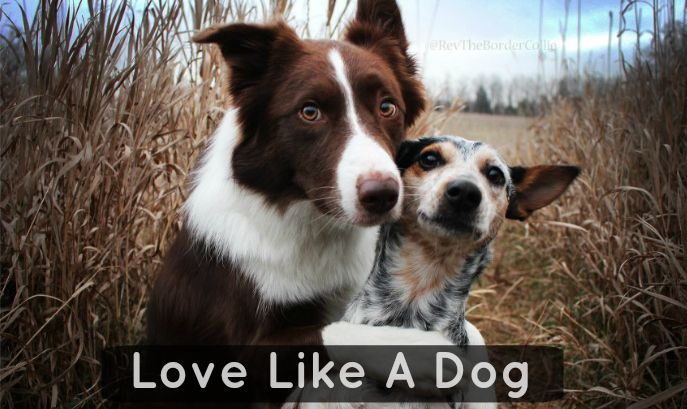 10 Things We Can Learn From Man's Best Friend About How To Be Better http://talenthounds.ca/news/10-things-we-can-learn-from-mans-best-friend/?utm_campaign=crowdfire&utm_content=crowdfire&utm_medium=social&utm_source=pinterest