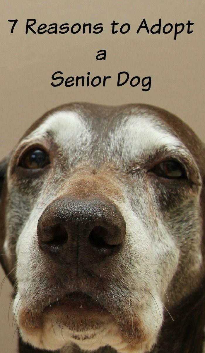 1123 best dog adoption tips images on pinterest a dog desktop backgrounds and dog breeds. Black Bedroom Furniture Sets. Home Design Ideas