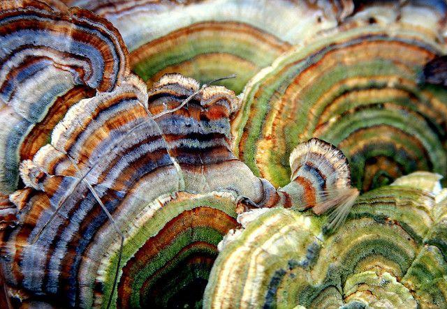 Fungus stripes