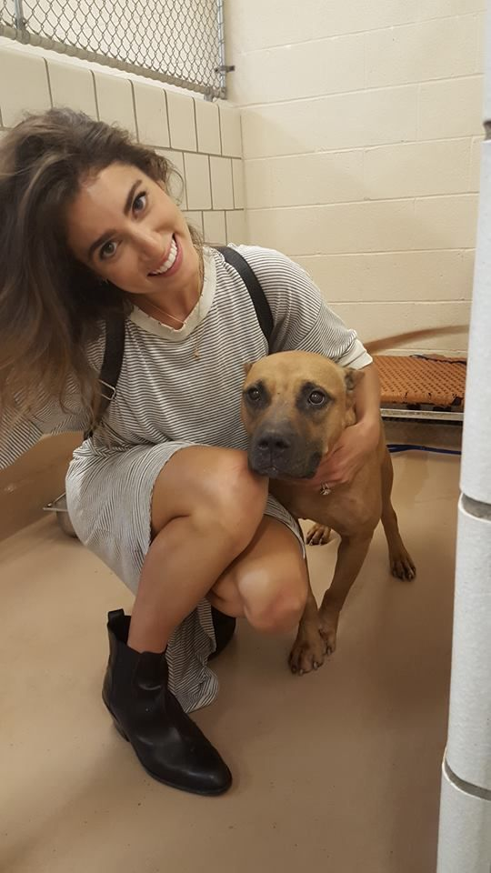 GA - URGENT FOSTER PLEA! Lives are hanging in the balance here. We are trying very hard to help Rockdale Animal Control and Nikki Reed place this sweet and pregnant dog, who happens to be a pit mix in a foster home. We don't want her to die! Look how sweet she is! We need a safe and welcoming environment for her to bring her babies into the world. Ideally we need a foster able to care for her and her b.