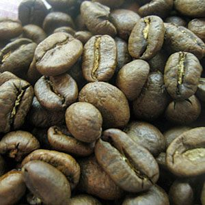 Freaky Food -Kopi Luwak       This is the world's most expensive coffee from Sumatra in Indonesia. The kicker on this delicacy? These Balinese coffee berries have been passed through the digestive tracts of a cute little critter called the Asian palm civet.