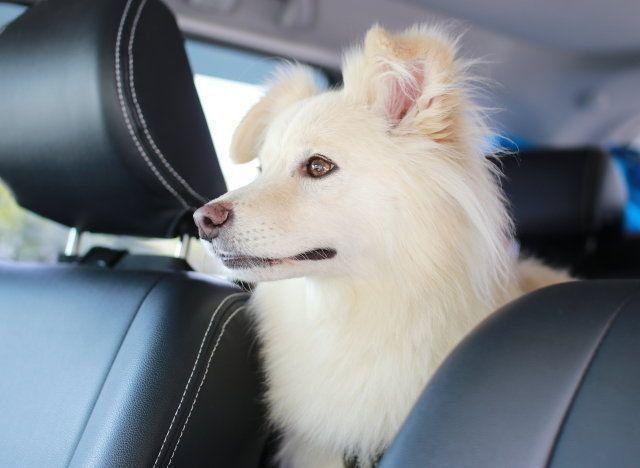 犬と6日間の旅へ 穴澤賢の犬のはなし いぬのきもちweb Magazine 犬 白い犬 いぬ