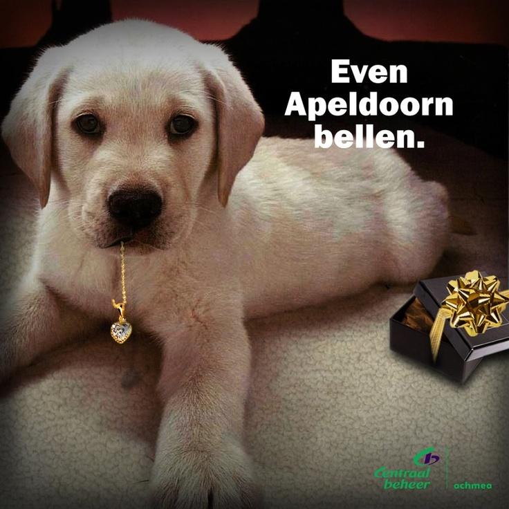 "Valentijnsdag ""Hond"". Je zou de kamer maar binnenkomen en je hond eet je romantische cadeau op.  Fighter: Isimerkx    Brand: Centraal Beheer Achmea"